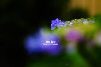 6月の宝石 VOL.07 - 君に届け