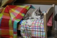 猫も私も大満足 - ぎんネコ☆はうす