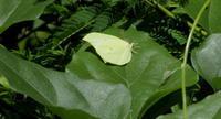 2017  ハイシーズン その2 - 紀州里山の蝶たち