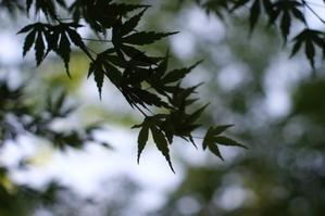 新緑の頃の鎌倉☆彡オールドレンズ☆彡 - 僕の足跡