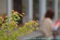 XR RIKENON 135mm f2.8で花菖蒲を - お山な日々・・・時々町