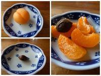 庭のアプリコット(杏)を試食しました。 - Happy world by yoshiko