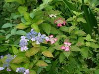 6月の庭 - 庭日和