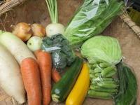 今週の野菜セット 6月3週目 - まるみど農園のあれこれ日記
