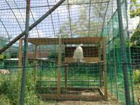 鶏小屋できた。と思ったら… - にじまる食堂 & にじまる農園