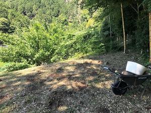 タラ芽移植計画 - 大きな欅の木のそばで