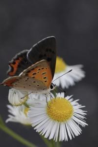 花と小さな蝶 - 365日  ☆Life