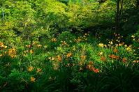 箱根のニッコウキスゲ - 風の香に誘われて 風景のふぉと缶