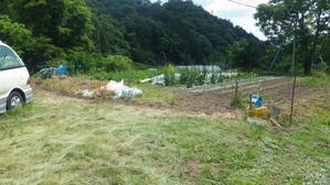 2回目の草刈りしました. - チドルばぁばの家庭菜園日誌パート2