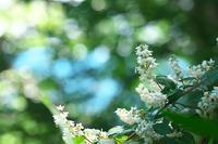 初夏の花 ~ウツギ~ - 但馬・写真日和