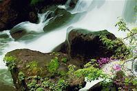 奥日光龍頭の滝とトウゴクミツバツツジ 5(Virtual Painter) - 光 塗人 の デジタル フォト グラフィック アート (DIGITAL PHOTOGRAPHIC ARTWORKS)