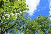 チェリーちゃんと♪ - FUNKY'S BLUE SKY