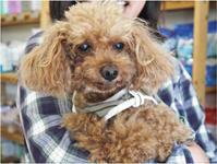 ドッグデンタルケア - SUPER DOGS blog
