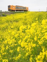 菜の花鉄道 その1 - お寺や神社、古い町並み、鉄道、他色々の写真ブログ