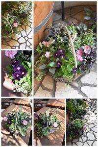 6月の寄せ植え教室 ① - 小さな庭 2