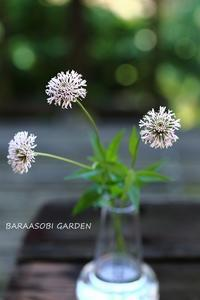 6月の庭から - バラと遊ぶ庭