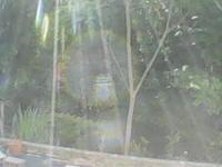 「芯」と周りの輪がはっきり写ってます - 森の精観察日記