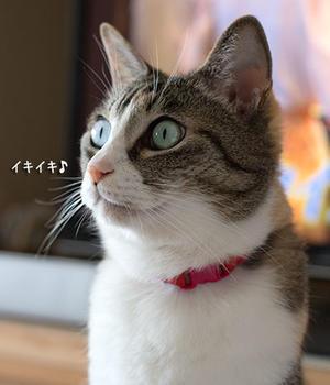 小梅ちゃんその後 - 梅蔵猫日記