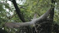 桜桃忌の鳥 - Life with Birds 3