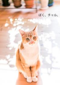 みゃーずきギャラリー「ねこ写真展」のお知らせ - 猫と夕焼け