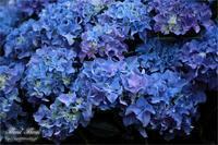 Bouquet - Flores*Flores