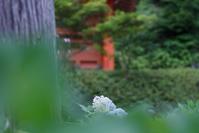 #eos 初夏の花 三室戸寺 - 関西ウォーカー自遊人 Trial