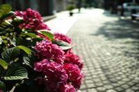 雨を待つ花 - ぴんの助でございます