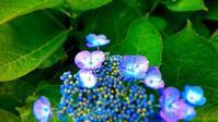 紫陽花 青系 - 虹色せんべい