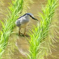 久しぶりの里山 - TACOSの野鳥日記