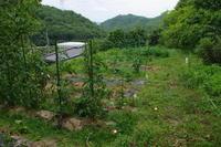 NO  96   ひとり農作業(2017.6.18) - カメラをもってぶらぶら散歩中