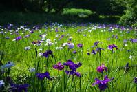 四季の森公園の花々 No3 - N.Eの玉手箱