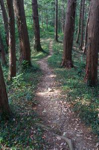 今日も日和田山へ - デジカメ写真集