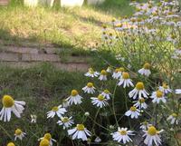 六月の庭 - ささやかだけれど役にたつこと