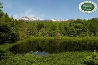 花と鳥に出会う高原の6月♬ - 乗鞍高原カフェ&バー スプリングバンクの日記②