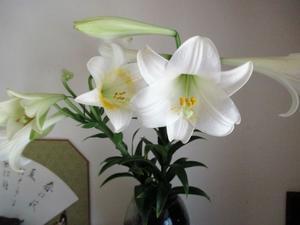 百合の花 - 季節の写真