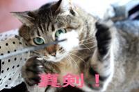 にゃんこ劇場「真剣白刃取り!」 - ゆきなそう  猫とガーデニングの日記