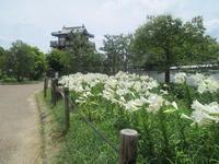 テッポウユリの季節です。他色々遊べる大阪池田市 - candy&sarry&・・・2