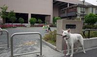 Vol.1197 尻手二丁目第二公園 - 小太郎の白っぽい世界