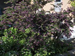 ジキタリス - 時々の花Ⅵ