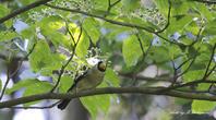 明るい樹上と暗い地表 - 雅郎の花鳥風月