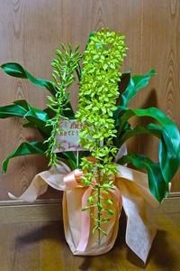 息子夫婦からお花が届きました ! ! - 玉家の生存報告
