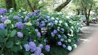紫陽花求めて矢田寺へ - 五十路を過ぎてブログに挑戦