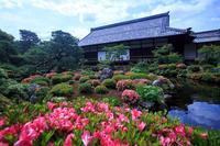 サツキの庭! ~等持院~ - Prado Photography!