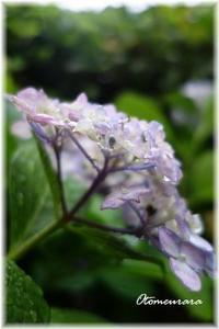 めぐみの雨・・・花わらう~ - 日々楽しく ♪mon bonheur