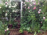 OPENガーデン2017🎶 - 薔薇に魅せられて