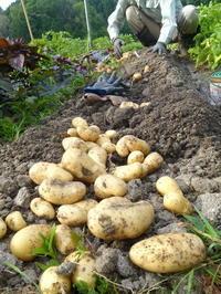 ジャガイモ掘り日和♫ - MASUDAの「間」ま