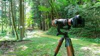 避暑地で森林浴と撮影機材の紹介 - kawanori-photo