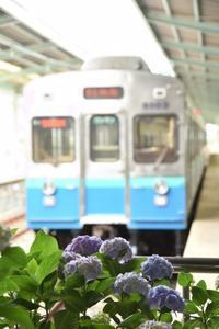下田の旅 - 想い出