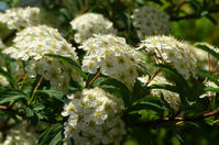 庭の花 - 花と天然石ハンドメイドジュエリー