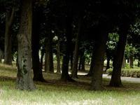 公園林 - 四十八茶百鼠
